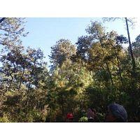 Vendo terreno en Tapalpa