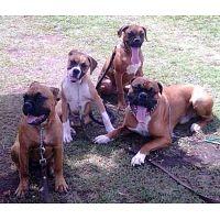 Curso de Adiestramiento Canino a Domicilio